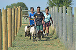 Robel Haile, a 13-year old resettled refugee from Ethiopia, leads a group of youth learning how to show sheep and goats in Linville, Virginia, on July 17, 2017. The youth are preparing to show their animals in a county fair. <br /> <br /> Haile and other refugees were resettled in the Harrisonburg, Virginia, area by Church World Service. <br /> <br /> Photo by Paul Jeffrey for Church World Service.