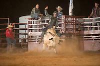 SEBRA - Chesterfield, VA - 8.27.2016 - Bulls