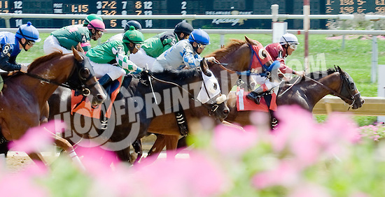 Lookin' Foxy winning at Delaware Park on 8/22/12