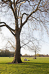Trees on a bright green lawn in spring in Regent's Park, London, England