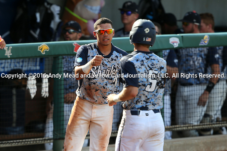 02 June 2016: Nova Southeastern's Jancarlos Cintron-Torres (7) congratulates Dylan Woods (5) after Woods scored a run. The Nova Southeastern University Sharks played the Cal Poly Pomona Broncos in Game 11 of the 2016 NCAA Division II College World Series  at Coleman Field at the USA Baseball National Training Complex in Cary, North Carolina. Nova Southeastern won the semifinal game 4-1 and advanced to the championship series.