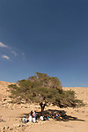 Israel, Acacia tree in the Negev desert