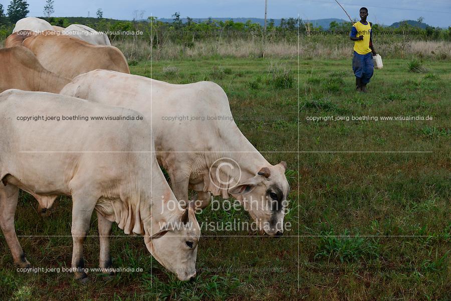 MOZAMBIQUE, Gondolo, BAGC Beira agricultural growth corridor, failed and abandoned 40 hectare Jatropha farm of Agro Pecuria de Manica LDA which was planted as biofuel project in 2010 at old portuguese cotton farm  / MOSAMBIK, Gondolo, BAGC Beira agricultural growth corridor, gescheiterte und aufgegebene 40 Hektar Jatropha Farm Agro Pecuria de Manica LDA, die 2010 als Biosprit Projekt auf einer alten Baumwollplantage gepflanzt wurde