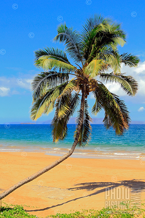 A coconut palm tree on Kawakapu Beach, Maui, with Molokini Crater and Kaho'olawe in the distance.