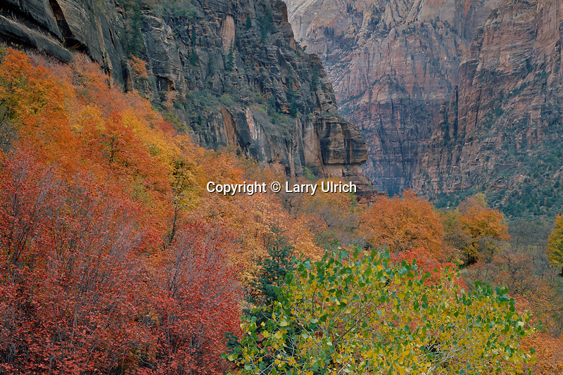 Fremont cottonwood and bigtooth maples<br />