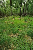 Bear Swamp Wildlife Management Area, Burlington County, New Jersey