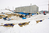 Dog teams rest out of the wind behind a building in Shaktoolik on Monday during Iditarod 2008