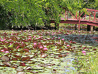 Lao Buddhist Temple lotus pond.
