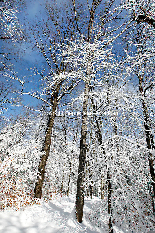 An afternoon sun illuminates snow covered trees on a trail at White Memorial in Litchfield on Friday. Temperatures were a bit milder following a snowstorm that brought mixed precipitation over the entire region on Thursday.      Christopher Massa Republican-American