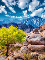 Fall colored tree in Alabama Hills, California. Sky has been added.