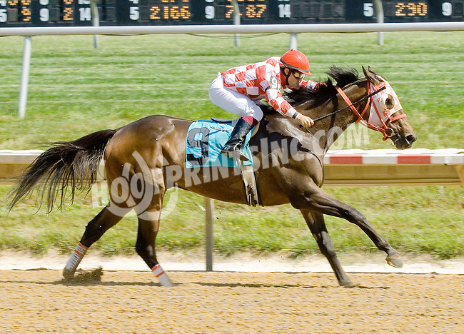 Kafwain Wedgeheart winning at Delaware Park on 6/16/12