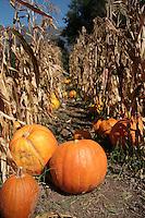 Fall Stock Photos