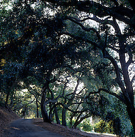 The old road, once a wagon trail, leads through an evergreen wood of California live oaks up to the property