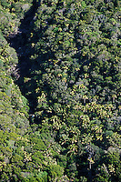 Forest on lower slopes of Mt. Gower, Lord Howe Island, NSW, Australia