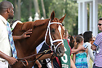 July 12, 2014: Delaware Handicap contender Princess of Sylmar in the paddock before the race. Belle Gallantey, Jose Ortiz up, wins the Grade I Delaware Handicap at Delaware Park in Stanton Delaware. Trainer is Rudy Rodriguez; Owners are Michael Dubb, Bethlehem Stabes LLC and Gary Aisquith ©Joan Fairman Kanes/ESW/CSM