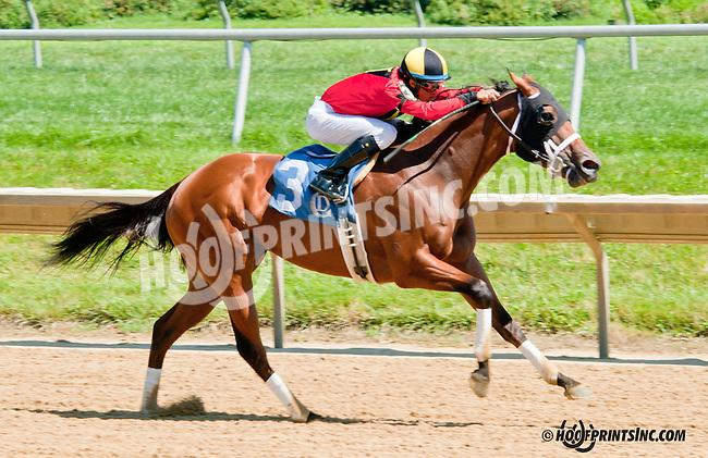 Virginia Ann winning at Delaware Park on 7/29/13