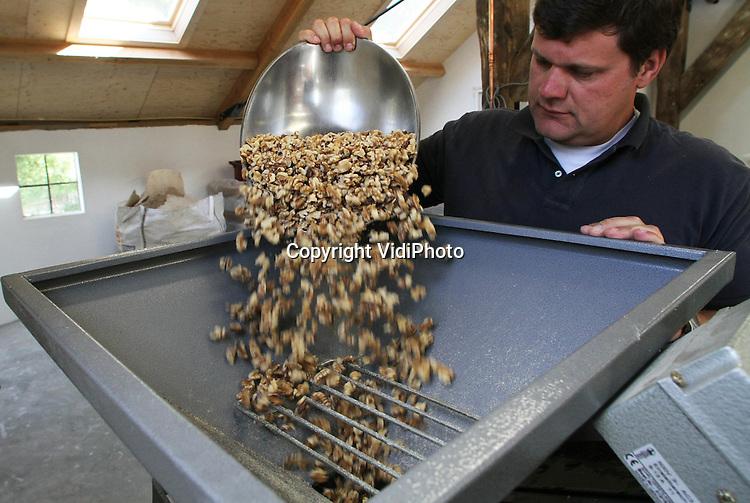 Foto: VidiPhoto..ZOELEN - Bij Mobipers in het Betuwse Zoelen worden woensdag walnoten verwerkt tot notenolie. De omgebouwde olijfpers is gekocht in Italië en daarmee de enige notenpers van Nederland. Voor het eerst wordt nu Nederlandse notenolie geproduceerd. De koek die overblijft wordt gebruikt als krachtvoer voor vee. De noten komen van particulieren, maar ook van de notenbomen op het bedrijf zelf. De olie is deels bestemd voor delicatessezaken en landwinkels. Mobipers start binnenkort met de eerste notenboomgaard van Nederland. Foto: Gepelde noten worden eerste gemalen..