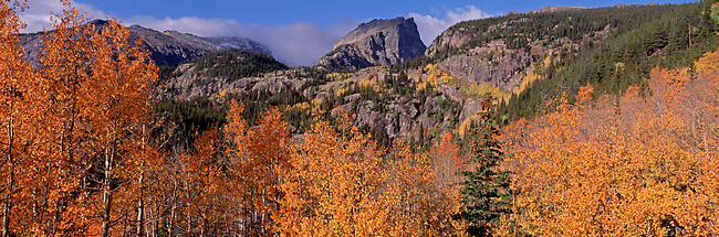 Colorful autumn aspen (Populus tremuloides) frame Hallett Peak in Rocky Mountain National Park, CO