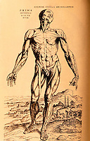 "Science:  Vesalius--The First ""Muscle Man"".  From  FABRICA 1543.  Photo '84."
