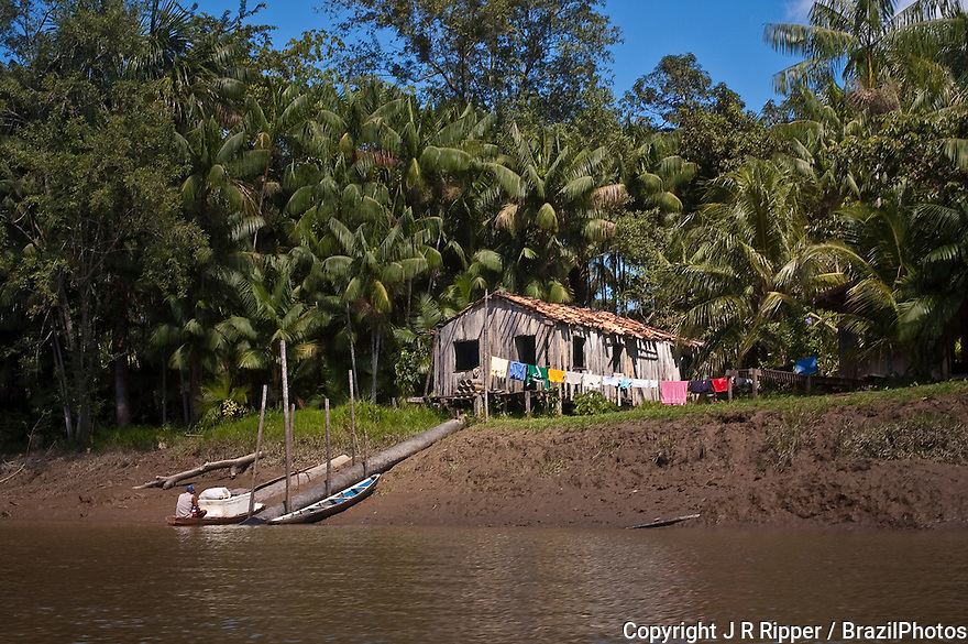 Brazilian Amazon riverine people - ribeirinho, those who live near the rivers and have artisanal fishing as the main survival activity and also cultivate small clearings for own consumption and can practice extractive activities - acai trees in background, Amapa State.