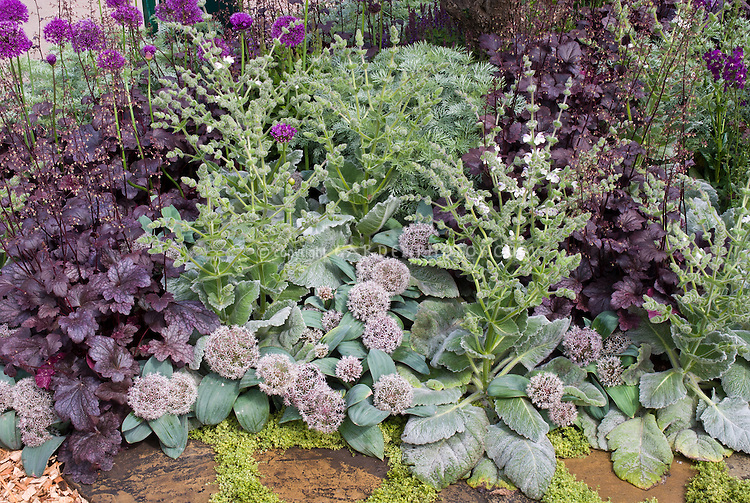 Silver And Purple Garden Foliage Flowers Plant