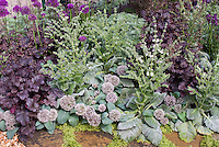 Allium karavatiense and Salvia sclarea, purple Heuchera and Allium for a gray silver and purple garden color theme using perennials and ornamental bulbs