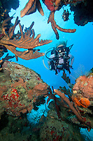 Heather Black diving Three Anchor Shoot Cane Bay, St. Croix, United States Virgin Islands