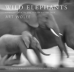 WILD Elephants Preview