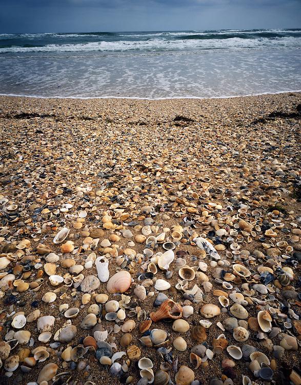 """Shells   Surf, Apollo Beach Cape Canaveral NS  FLORIDA"""