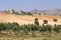 Tunisia, near Testour.  Farm.  Olive Trees in Foreground.