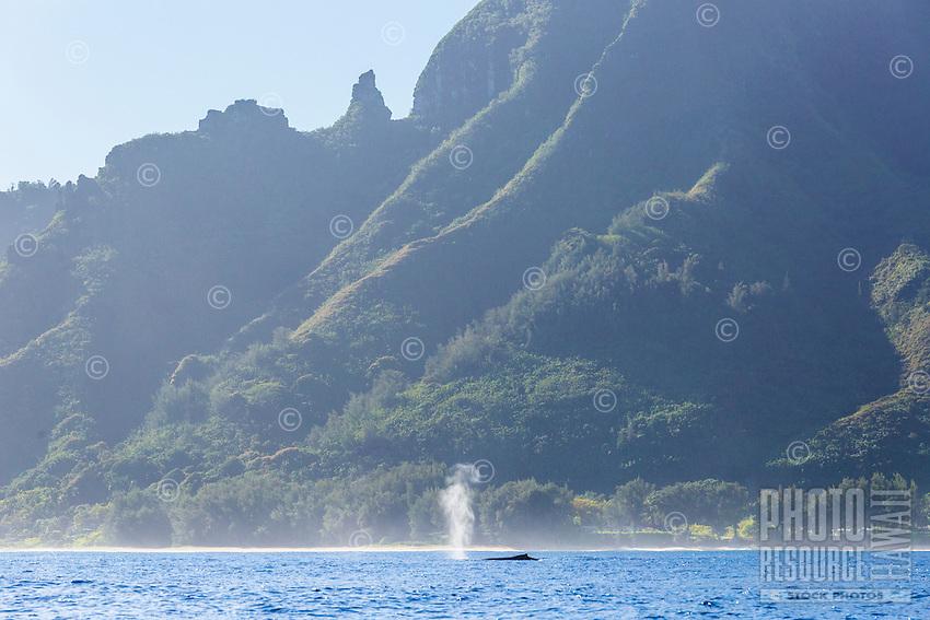 A humpback whale blows out air off of the Na Pali Coast of Kaua'i.