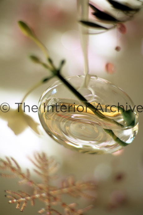 A detail of a suspended glass Christmas decoration filled with water and a cut flower