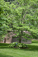 Dogwood, hosta, shade and shed in backyard with nice lawn & gazing ball