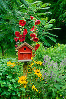 Red barn birdhouse with hollyhocks and black eyed susans (rudibecka) adds design feature to country garden,