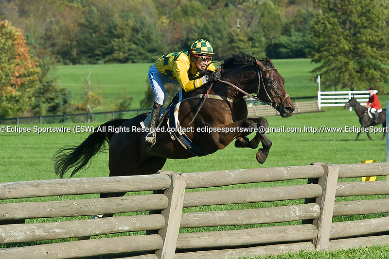 15 October 2011: Incomplete and Mark Beecher win the International Gold Cup Timber Stakes at Great Meadow in The Plains, Va. Incomplete is owned by Robert Kinsley and trained by Ann Stewart.    Susan M. Carter/Eclipse Sportswire