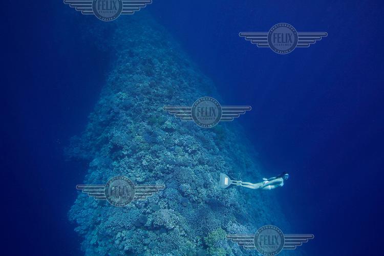 Elisabeth Kristoffersen freediving in Blue Hole near Dahab,Sinai in Egypt. © Fredrik Naumann/Felix Features