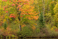 The East Fork of the Chippewa River in the Chequamegon National Forest