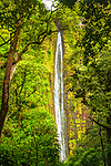 Waimoku Falls, viewed through tropical green rainforest, Haleakalā National Park, Maui, Hawaii.