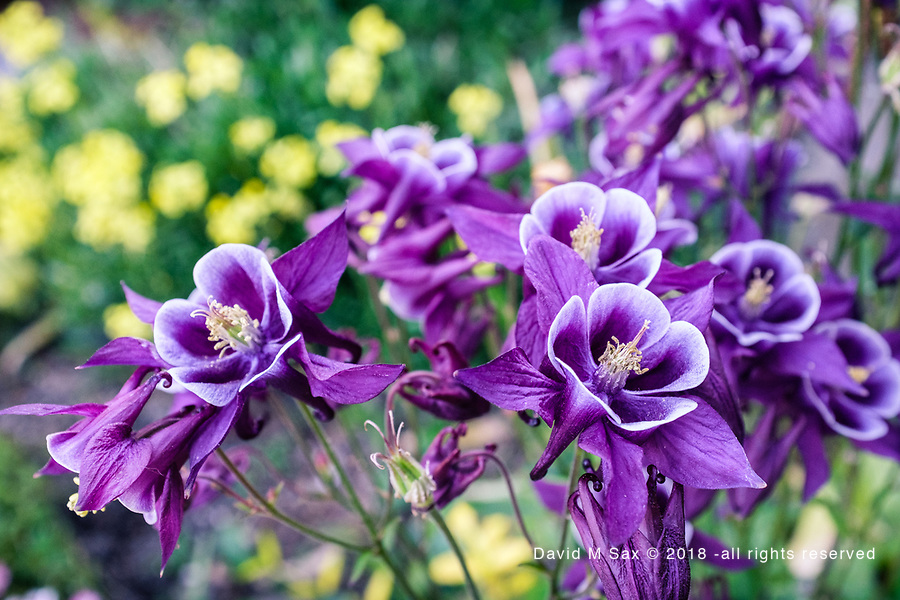 5.20.17 - Purple...