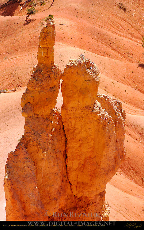 Bryce Canyon Hoodoo, Fickle Finger of Fate, Sunset Point, Bryce Canyon National Park, Utah