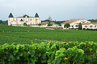 Vineyard. Chateau de France, Pessac Leognan, Graves, Bordeaux, France