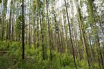 Forested hillside on Ella Rock mountain, Badulla District, Uva Province, Sri Lanka, Asia