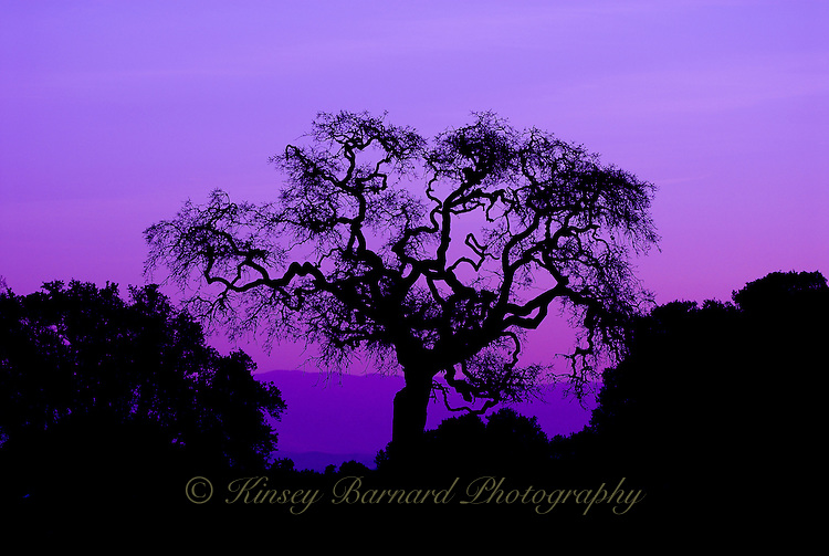 """ROBLE REY""<br />