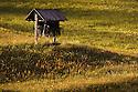 Hay meadow shortly before cutting with hay stook rack storage hut, Nordtirol, Tirol, Austrian Alps, Austria, June.