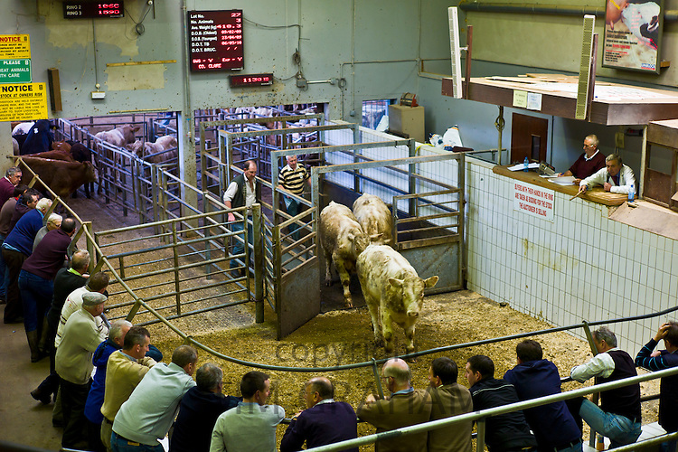 Farmers at cattle auction in Ennis, County Clare, West of Ireland