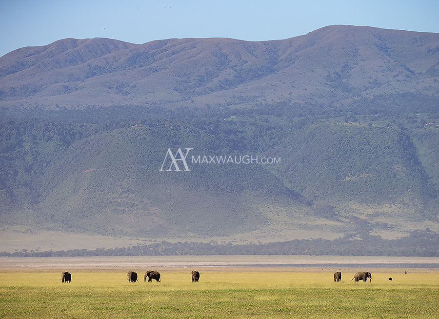 "Ngorongoro Crater is home to some of the world's remaining ""big tuskers."""