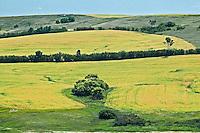 farmland and peas<br /> Minton<br /> Saskatchewan<br /> Canada