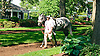 South Andros in the paddock before The Winter Melody Stakes at Delaware Park on 5/20/15