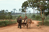 Xapuri, Acre State, Brazil. two boys driving an ox cart along a dirt road.