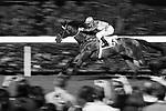 29 November 2017 - HKJC Horse Racing 2017-18